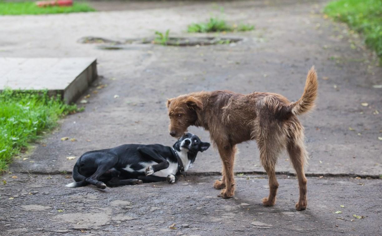 В Туле закрывают приют для животных «Континент+»