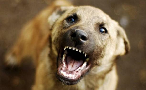 В Веневском районе бродячая собака напала на несовершеннолетнего