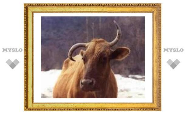18 февраля: Коровья смерть