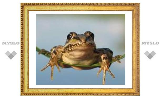 21 апреля: Ищи лягушку с голосом