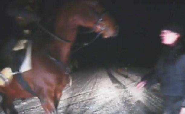 Жуткое видео: под Тулой всадники на лошадях напали на водителя и его жену
