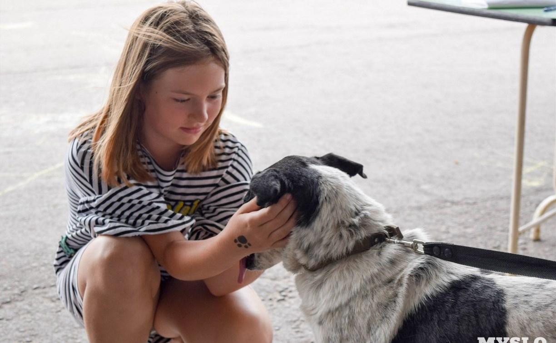 Благотворительный фестиваль помощи животным в Туле: афиша