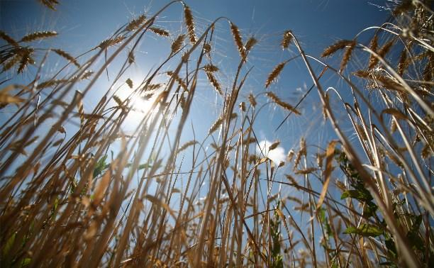 Правительство региона ответило на вопросы сельхозпредпринимателей
