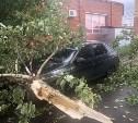 На Зеленстрое в Туле сильный ветер повалил дерево на машину