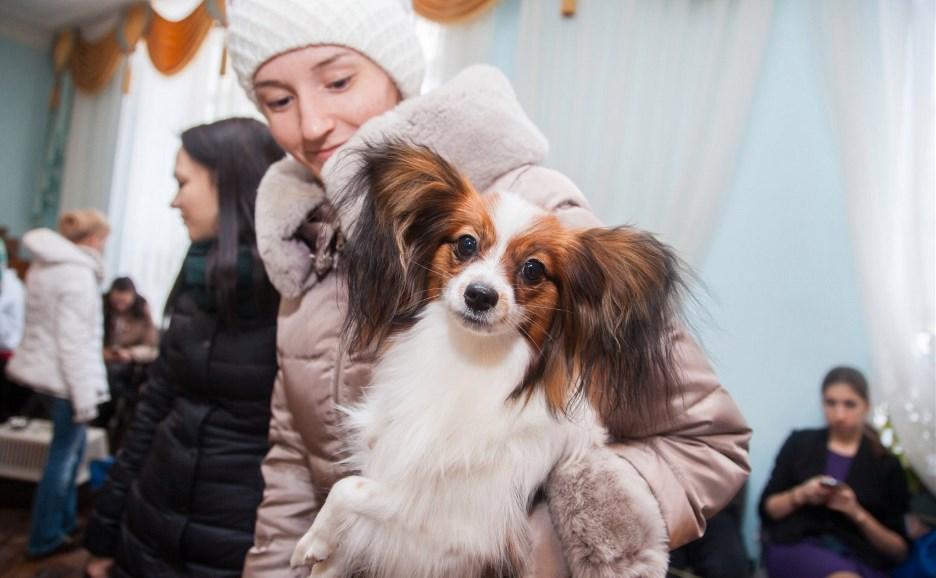 Новогодняя выставка собак