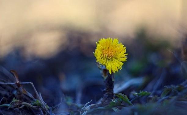 20 марта наступит астрономическая весна: В Туле обещают снег и грозу