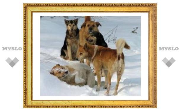 Собаки насмерть загрызли тулячку