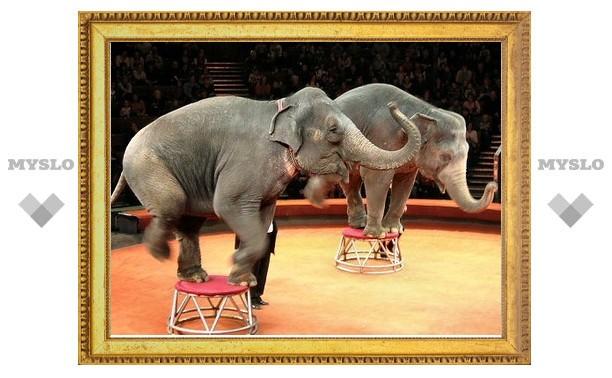 В Тулу едет цирк слонов