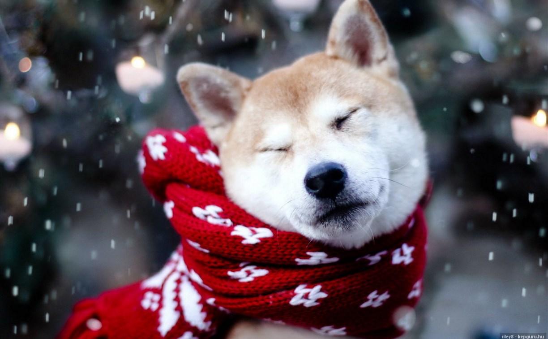 Погода в Туле 13 января: снег и гололедица