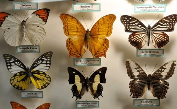 В экзотариуме можно увидеть бабочку Дуру