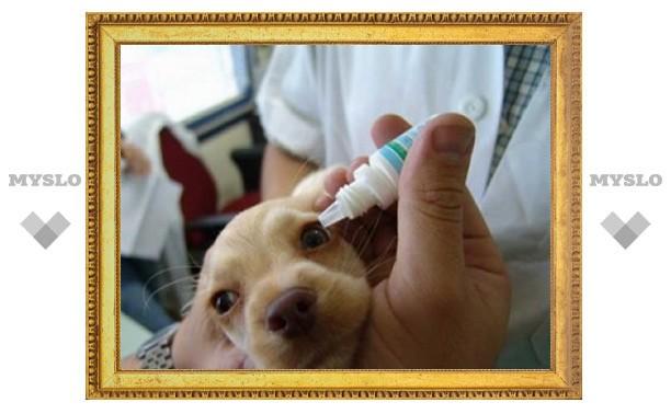 Тульские ветеринары навязывали бизнесу платные услуги
