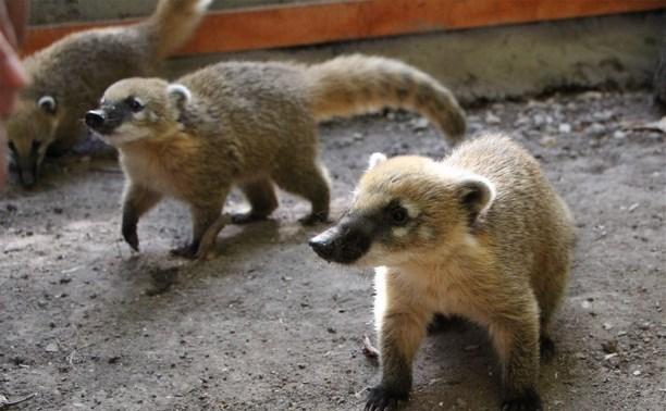 В Детском парке Новомосковска осенью откроется мини-зоопарк