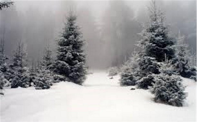 В Ясной Поляне ели возьмут под усиленную охрану до Нового года