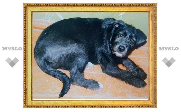 В Туле найден щенок