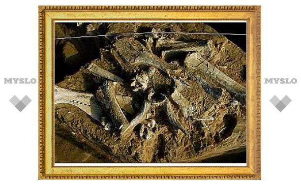 """Обнаружены остатки """"затерянного мира"""" млекопитающих"""