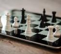 Туляков приглашают на бесплатные онлайн-занятия по шахматам