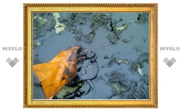 В Тульской области произошла экологическая катастрофа