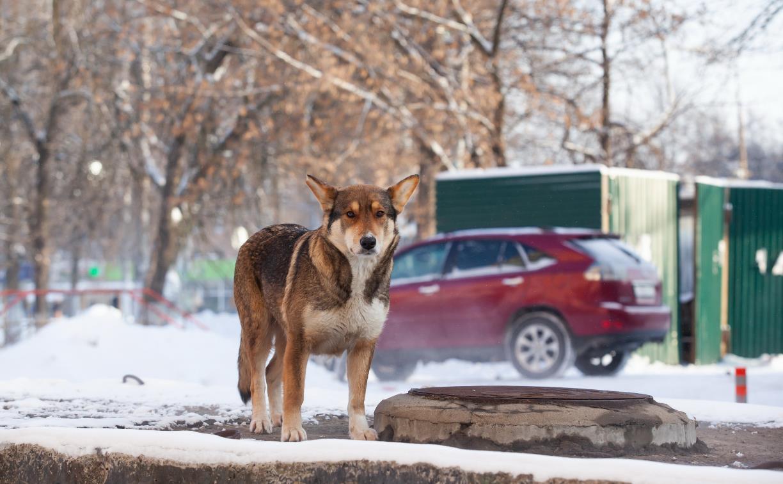 В Тульской области появилась горячая линия по отлову бездомных собак