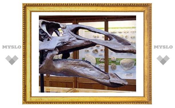 Морозоустойчивость динозавров недооценили