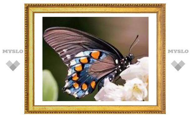 """Тулякам предлагают раскрыть """"Секрет бабочки"""""""