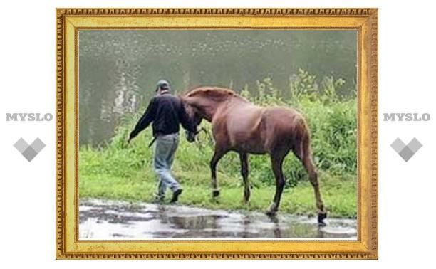 Рязанская полиция устроила засаду похитителям тульских лошадей