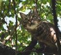 Солнечный удар у животных: как распознать и чем помочь питомцу