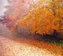 Погода в Туле 25 октября: облачность, туман и без осадков