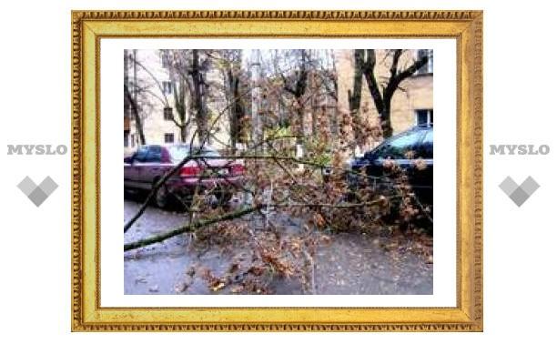 В Туле на авто упало дерево