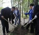В сквере «70-летия Победы» высадили ивы