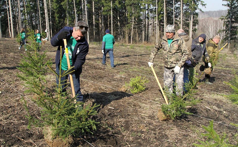 Депутаты Тульской облдумы посадили 250 ёлочек в Ясной Поляне