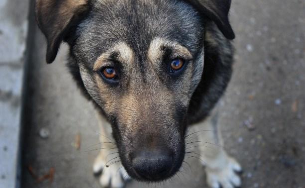 В Туле возобновили отлов бездомных животных