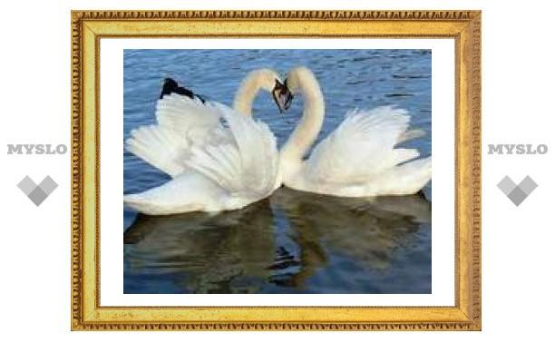 В Туле отпразднуют День любви