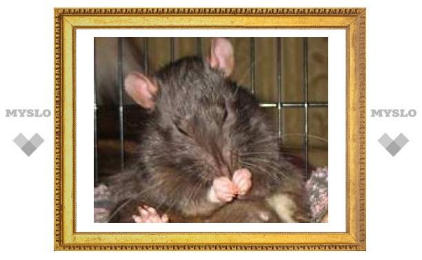 В центре Тулы будут травить мышей и крыс