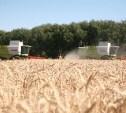 Тульская область заняла четвёртое место в ЦФО по производству картофеля