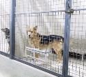 Куда из Тулы увезут бездомных собак
