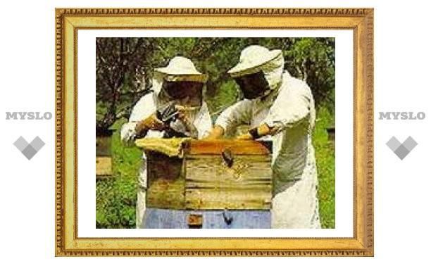 Под Тулой пройдет чемпионат по пчеловодству
