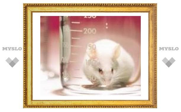 Крысы додумались до правил