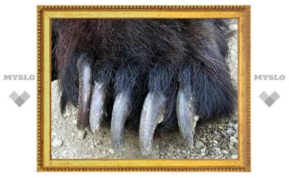 Пресечена контрабанда рекордной партии медвежьих лап