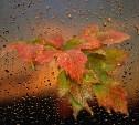 Выходные в Тульской области будут дождливыми и пасмурными