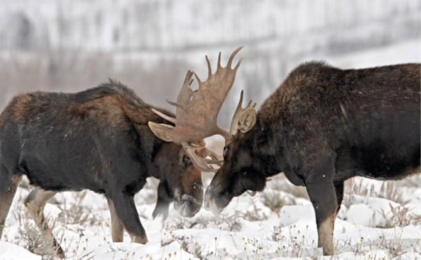 В Венёве поймали браконьера