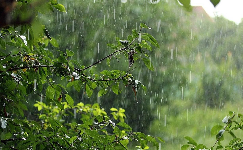 9 июля в Туле ожидаются дожди и грозы