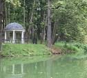 Источник загрязнения пруда в Платоновском парке установит минэкологии Тульской области