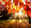 Погода в Туле 12 сентября: сухо, жарко, переменный ветер