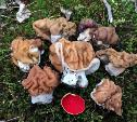 Грибной сезон: туляки пошли в леса за «мозгами»