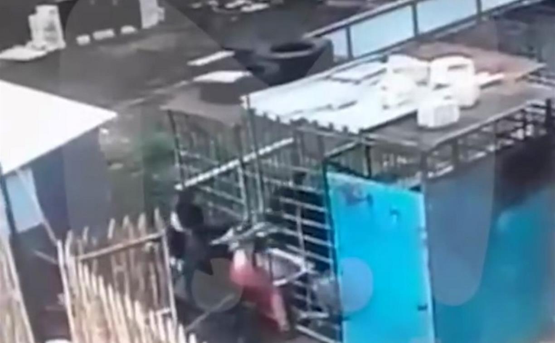 В Курске медведь из тульского зоопарка напал на женщину