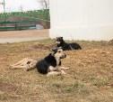 Двое жителей Белевского района пытались до смерти забить собаку молотком и задушить ее
