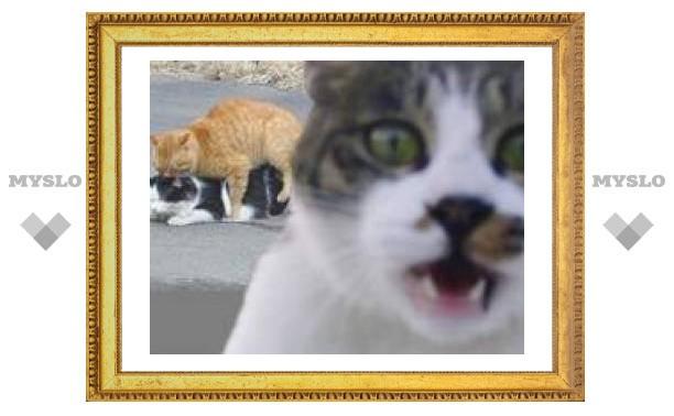 ЧП в Туле: мартовский гон у котов наступил в феврале