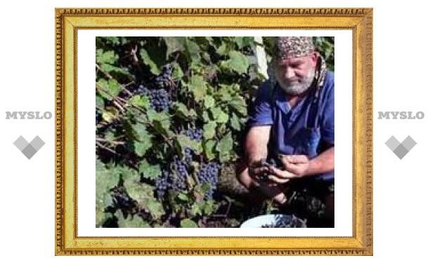 Вино спасет от старческого слабоумия