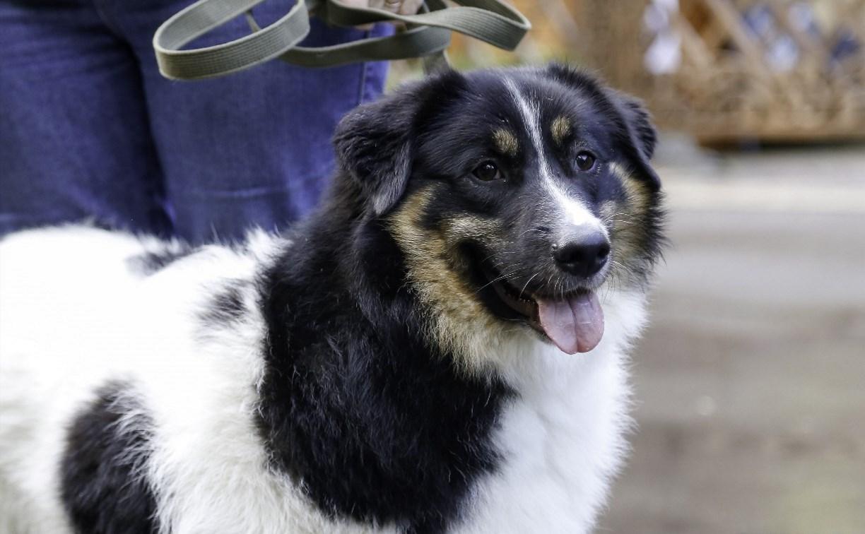 В России владельцев собак обяжут убирать за питомцами во время выгула
