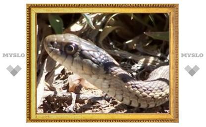 Змеи откроют секрет обольщения